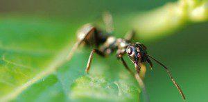 S.com-Insectos-69