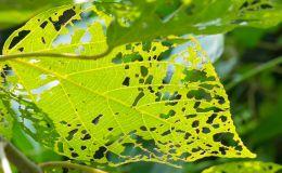 Empresa control de plagas en jardines Madrid