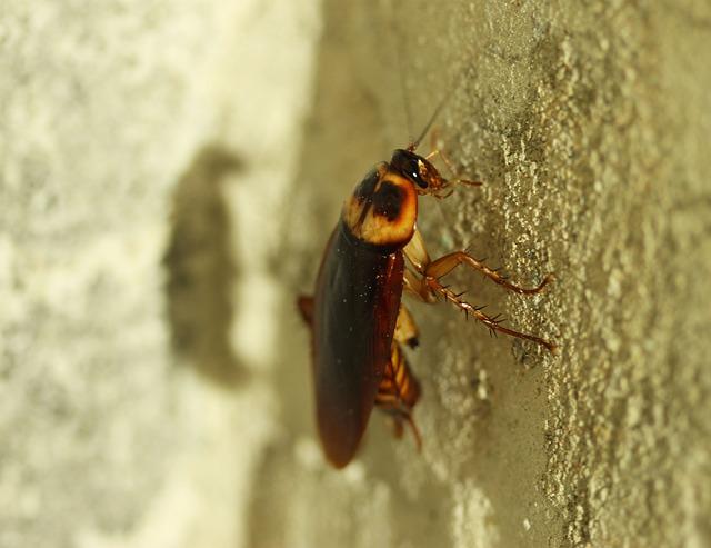 El problema de la cucaracha alemana en la hostelería
