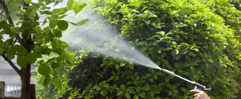 Por qué es necesaria la fumigación del jardín