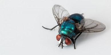 Cómo combatir una plaga de moscas y mosquitos