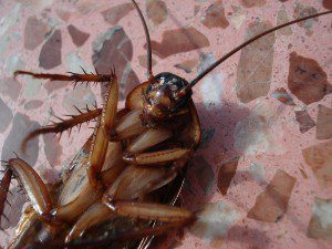 cockroach-15093_1920.jpg