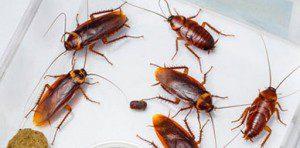 fumigadores-de-cucarachas1