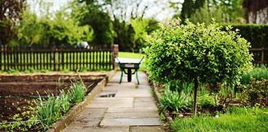 Cómo tener el jardín libre de pulgas y garrapatas con la llegada del calor